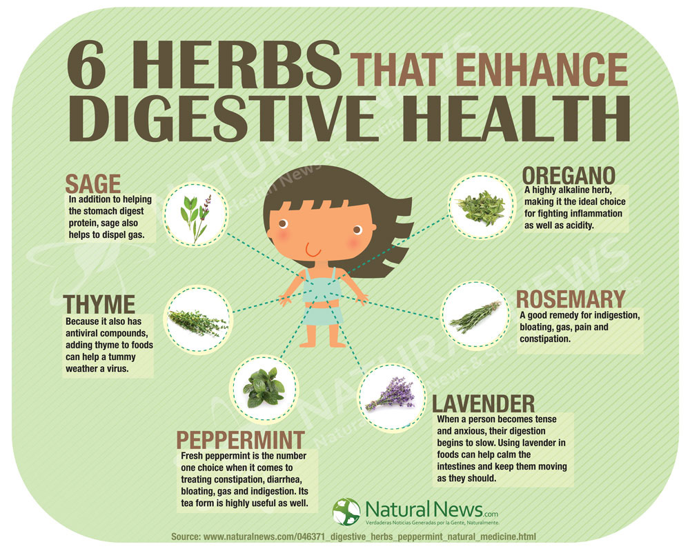 Infographic-6-Herbs-That-Enhance-Digestive-Health