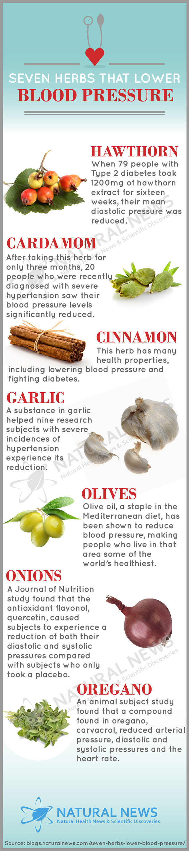Infographic-Seven-Herbs-That-Lower-Blood-Pressure