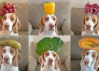 And Now… 100 Fruits & Vegetables on Dog's Head in 100 Seconds!