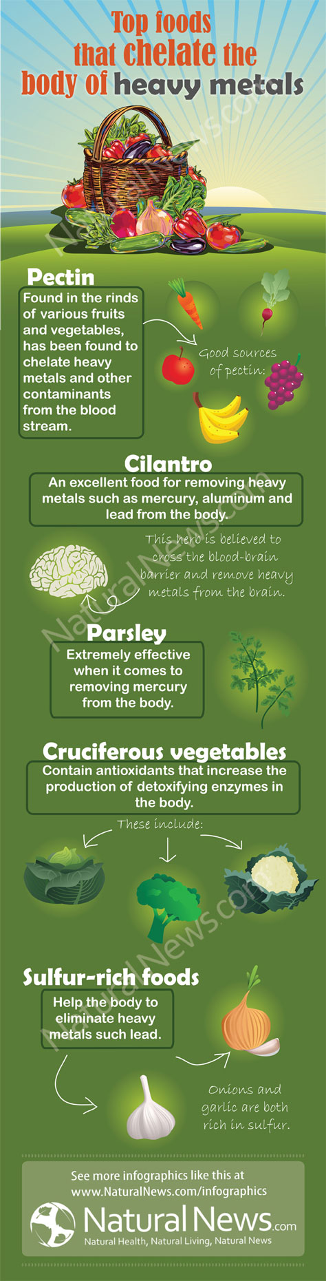 Infographic-Top-Foods-to-Chelate-Metal_small
